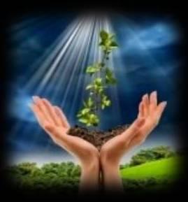 00-0-00-0-0-0foto-de-manos-sosteniendo-pequeno-cultivo-planta-verde00